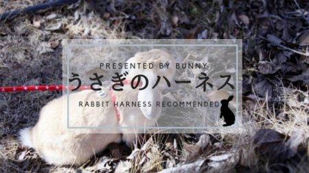 ウサギのハーネスおすすめ