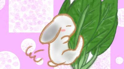 うさぎ 小松菜