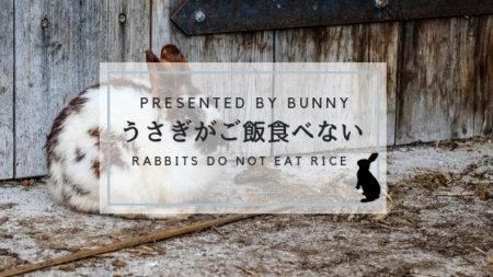 うさぎがご飯を食べない