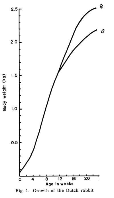体重  グラフ ダッチ うさぎ