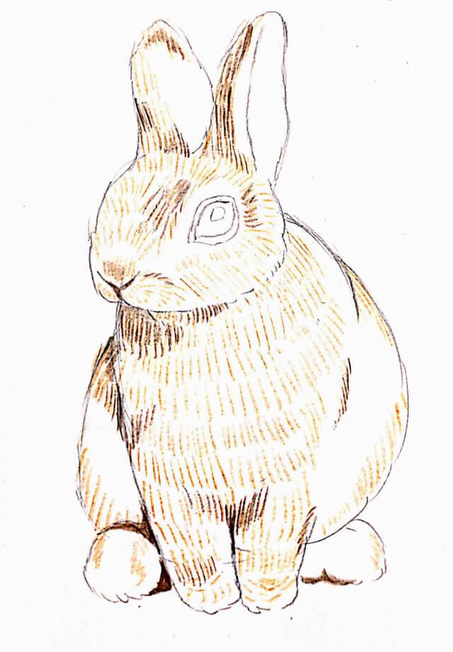 イラスト 色鉛筆 手書き うさぎ